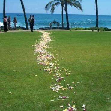 Carpet of Petals