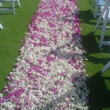 Carpet of Petals Wide