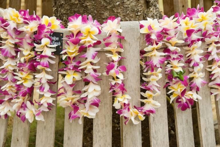 Plumeria Orchid Mix