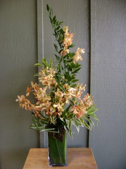 Makara Orchids Arrangement 19